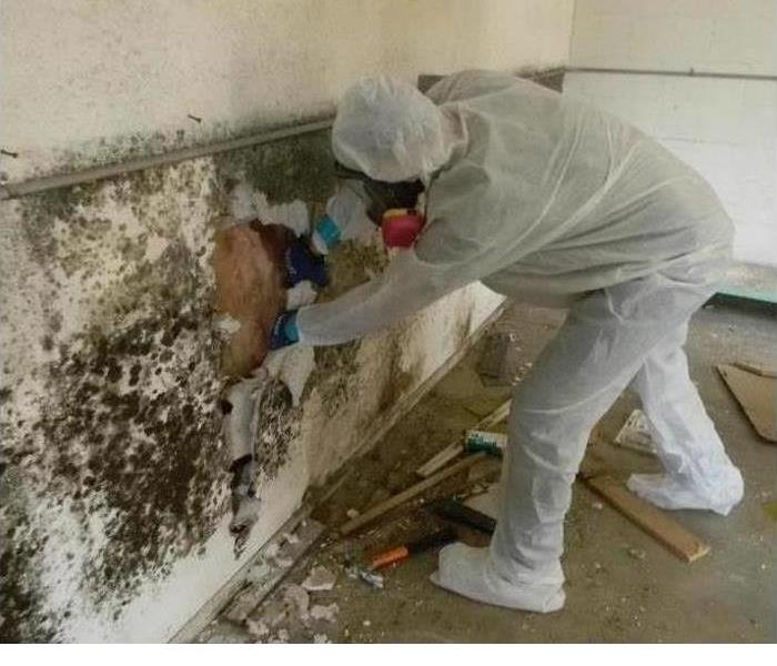 Mold Remediation Tips To Follow If You Suspect Mold!
